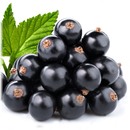 Black Currant 10ml -Basic-